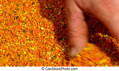 Fresh bee pollen and bee-keepers hand