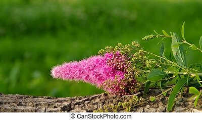 Pink flower growing in a bush