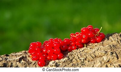 Red currant on a green background in the wind