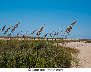 Sea Oats along a sandy path bright blue sky with room for...