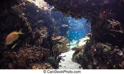 Fishes in Lisbon Oceanarium with corals, Portugal timelapse...
