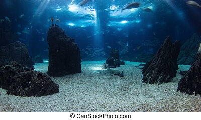 Fishes in Lisbon Oceanarium with rocks, Portugal timelapse -...
