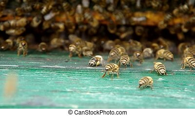 Bees at the entrance to the beehive - Bee at the entrance to...