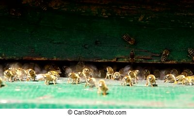 Bees at the entrance to the beehive, lower the temperature...