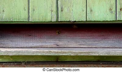 Bees flying into the hive, where wearing their accumulated...