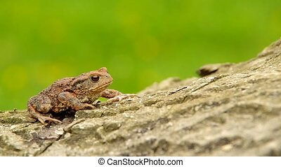 Toad frog on a wooden bark and green background