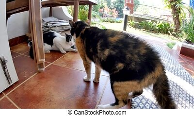 Cats fight