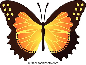 Vector Butterfly Illustration