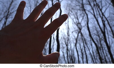 Hand to Sun Silhouette, Sun Rays and Forest on Background