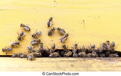 Honey bees in yellow beehive - Honey bees are flying in and...