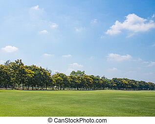 cidade, grande, parque, campo, verde, capim