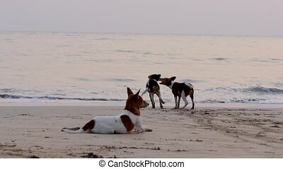 dogs playing in the ocean water