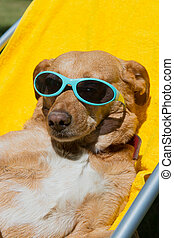 Dog taking sun bath - Dog on vacation with sunglasses...