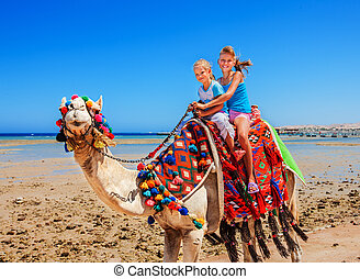 Tourists riding camel on the beach of Egypt. - Tourists...
