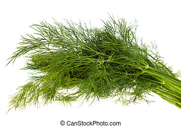 fresh fennel isolated - bunch of fresh fennel, isolated on...