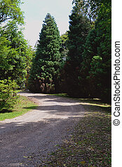 Road and trees - Dirt road and trees