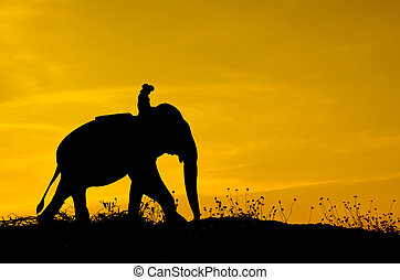 Elephant and grass silhouettes background with sun set