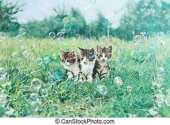 Three kitten in summer - Three little kitten sitting among...
