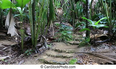 Tourist trail in Vallee de Mai Nature Reserve - Tourist...