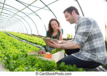 Farmer teaching new employee to gardening - View of a Farmer...