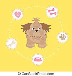 Little glamour tan Shih Tzu and dog stuff. Dash line circle....