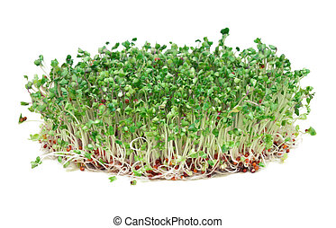 Young broccoli sprouts, a phytochemical-rich cancer-fighting...