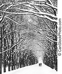 Two people are on the long avenue of trees along