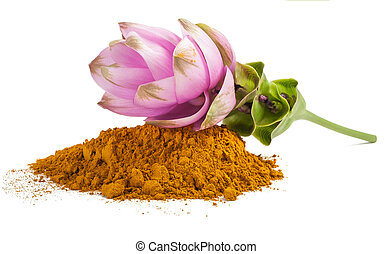Curcuma flower and  powder isolated on white