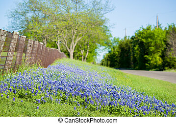 Texas Wildflowers - Texas bluebonnets framing a rural Texas...