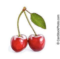 Cherry isolated on hite background.