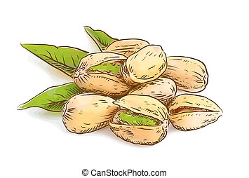 Pistachios isolated on white background.