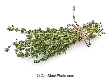 timyan 3 - Thyme isolated on white background.