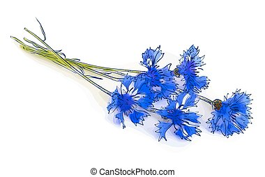 Cornflower isolated