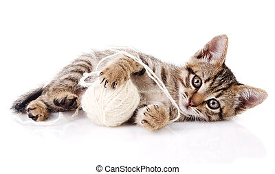 playful kitten with white ball - playful tabby kitten with...