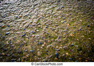 Stone and Algae - Water covered stone and algae in natural...