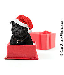 Pug Present - Black pug with santa claus hat inside a red...