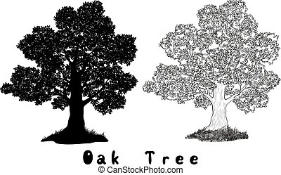 Oak Tree Silhouette, Contours and Inscriptions