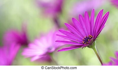 Purple Spring Flower in Spain