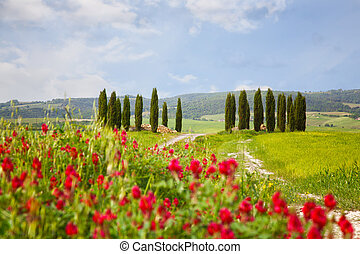 Landscape with cypresses and bright red flowers in the...