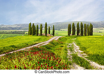 Italian summer landscape with cypresses, the road and bright...