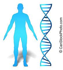 humano, gene, investigación, icono,