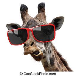 Funny fashion portrait of a giraffe