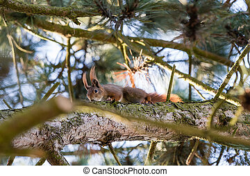 squirrel sitting in the branches of a tree