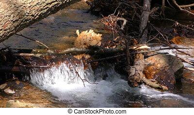 Waterfall Creek in Nature