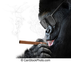 Badass gorilla with cool sunglasses smoking a cuban cigar...