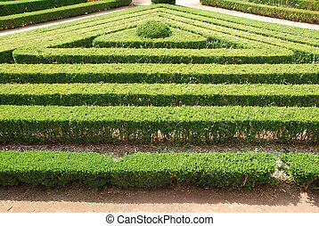 Green cuted bushes triangular shape - beautiful garden with...