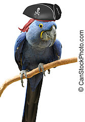 Cool and unusual pirate parrot bird portrait.