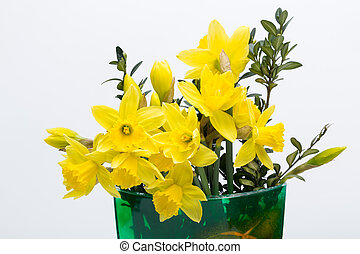 Yellow jonquil flowers isolated on white background
