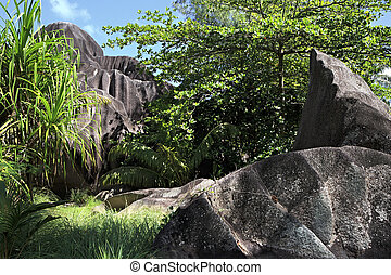 Black granite rocks in the thickets of tropical vegetation.