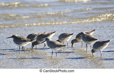 sea bird - group of birds on the beach